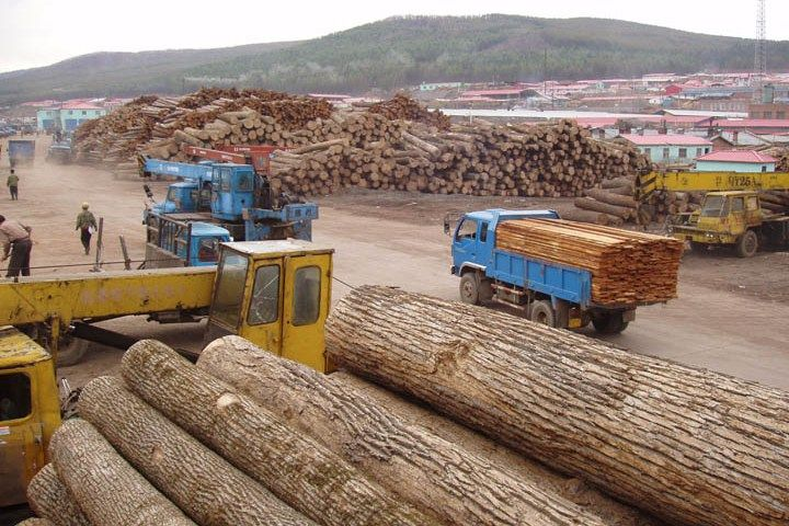 Timber thieves are stealing wood from the Russian Far East, processing it in China and then shipping it to North America, a 16x9 investigation has found.  Make sure your flooring has been made from North American lumber!