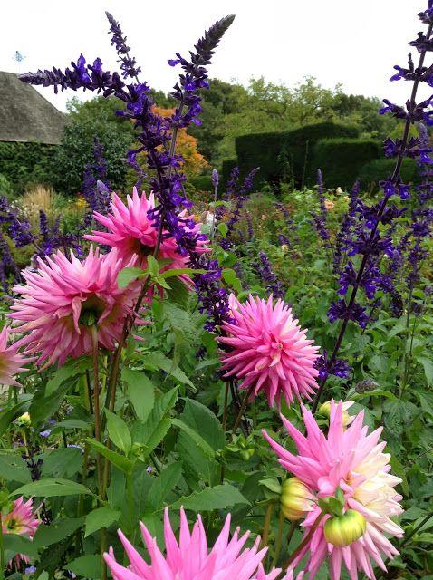 Dahlia and Salvia at Great Dixter House and Gardens, October 2013 - Photo by Noemi Mercurelli of Mercurelli's Garden Design
