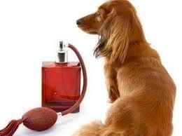 Cómo eliminar el mal olor a perro
