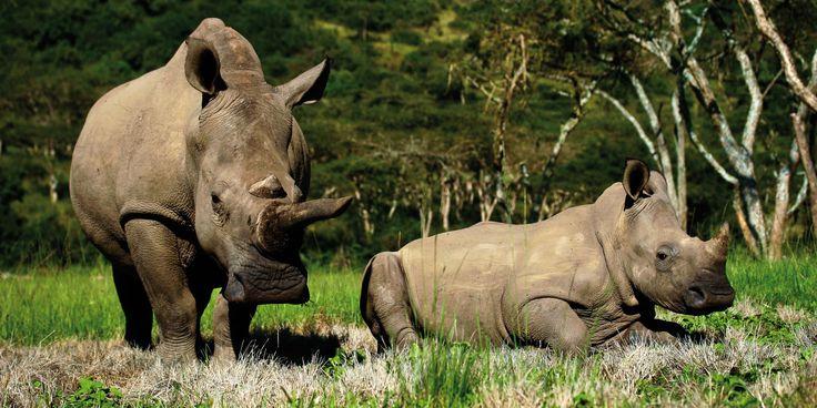 13 loved, cared for and protected Rhino at Karkloof Safari Spa. www.karkloofsafarispa.com