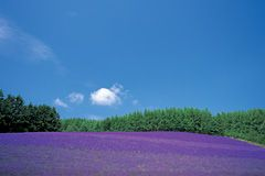 Enjoy the natural environment of Hokkaido in summertime in both simple and deep ways | JAPAN Monthly Web Magazine