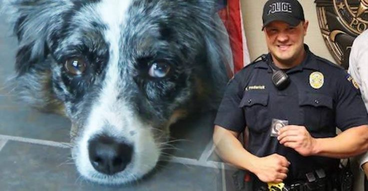 good news, puppycide, police get training to not shoot dogs, Round Rock Police department, police state, police training
