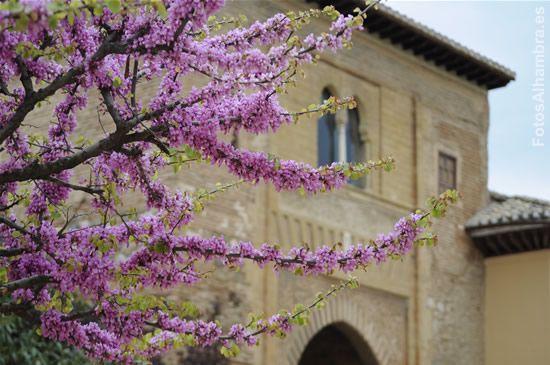 Puerta del Vino en primavera