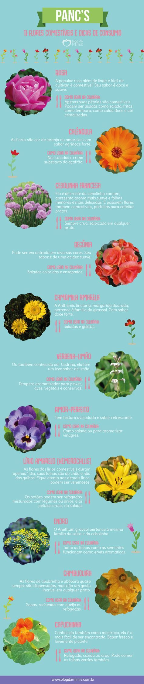 11 Flores comestíveis e dicas de consumo - Blog da Mimis #flores #comestíveis #panc