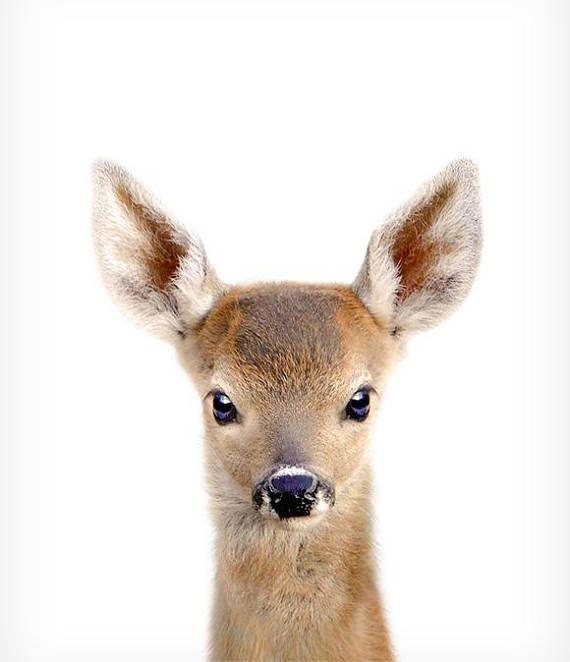 Deer print, Woodland animal prints, The Crown Prints, Baby room wall art, Nursery animals, Baby animal prints, Fawn, Nursery animal art