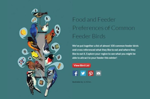 Want to attract birds this winter like never before? Use the Project FeederWatch tool to choose the right foods and feeders.