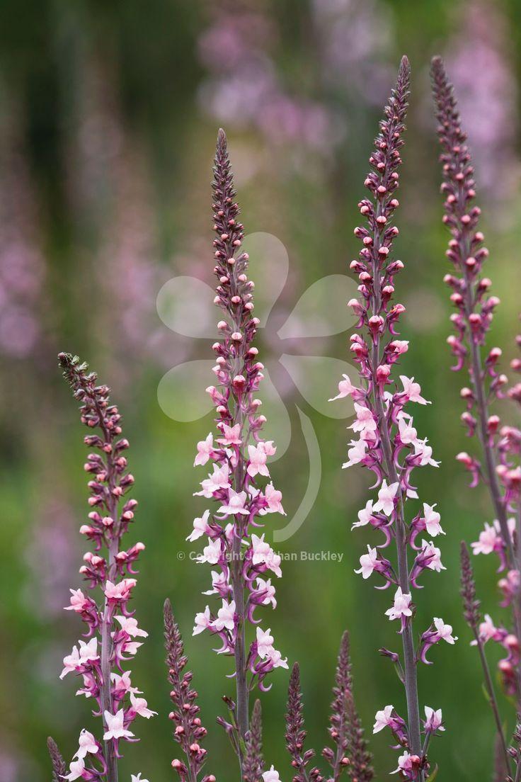 2016 best Home - Garden Flowers images on Pinterest | Flowers ...