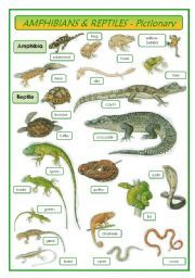 English worksheet: Amphibians & Reptiles - pictionary ... 10 Examples Of Reptiles