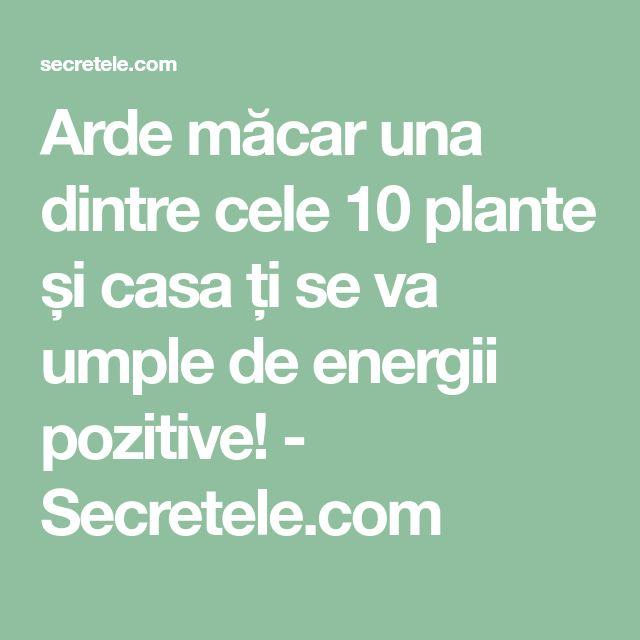 Arde măcar una dintre cele 10 plante și casa ți se va umple de energii pozitive! - Secretele.com