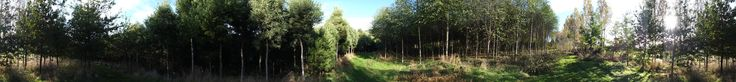 Sustainable forestry woodlot 32 ha Dunedin NZ 13 years after planting