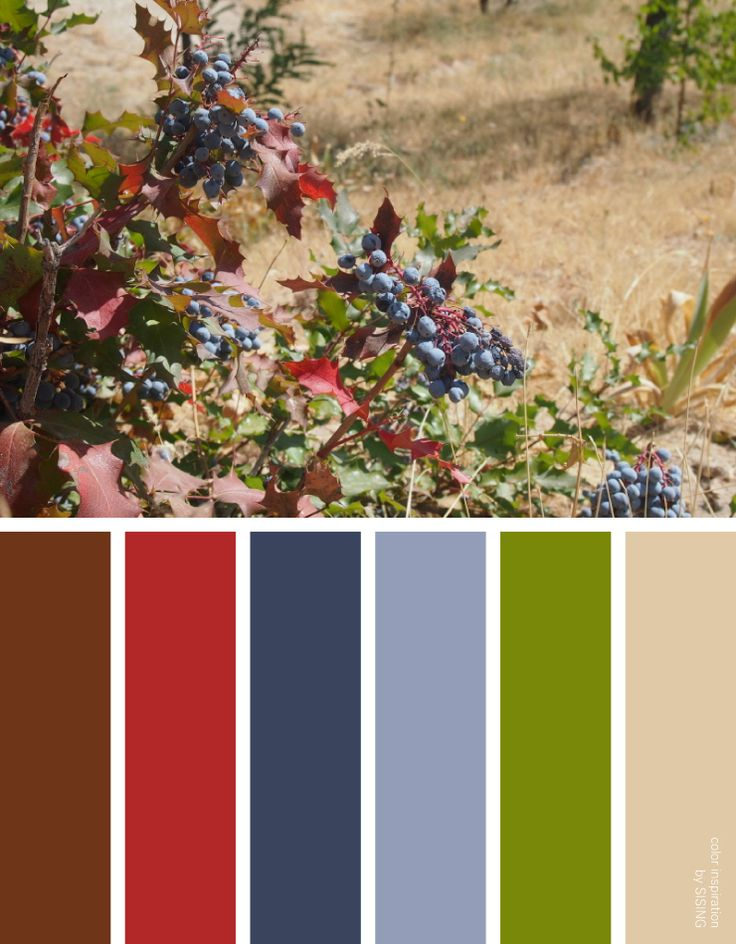 [color inspiration & photo by SISING] wild, fruit, berry, blue purple, red, complementary color