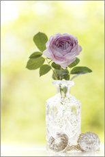 Rose in einer Kristallvase  #utart #fineartphotography #artprint #posterlounge #roses #englishroses #pink