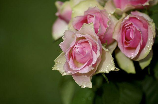 fleurs a livrer 62 #fleurs #bouquet