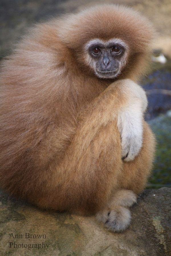 Monkey by Antje Braun on 500px