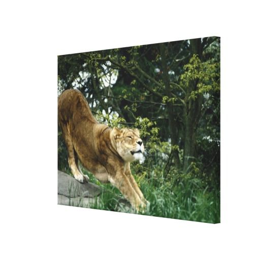 ==>Discount          24114343 STRETCHED CANVAS PRINTS           24114343 STRETCHED CANVAS PRINTS online after you search a lot for where to buyDeals          24114343 STRETCHED CANVAS PRINTS Review on the This website by click the button below...Cleck Hot Deals >>> http://www.zazzle.com/24114343_stretched_canvas_prints-192013024462024591?rf=238627982471231924&zbar=1&tc=terrest
