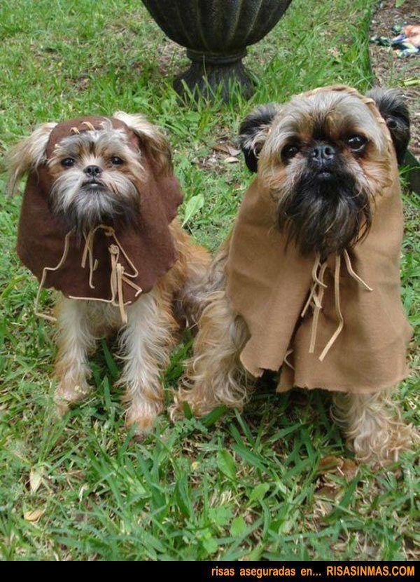 Disfraces para Mascotas en Halloween - Disfraz de Ewok para Shih Tzu