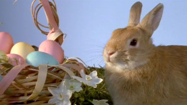 History of Easter: How did Easter traditions like the Easter bunny and egg hunts become part of the holiday celebration?