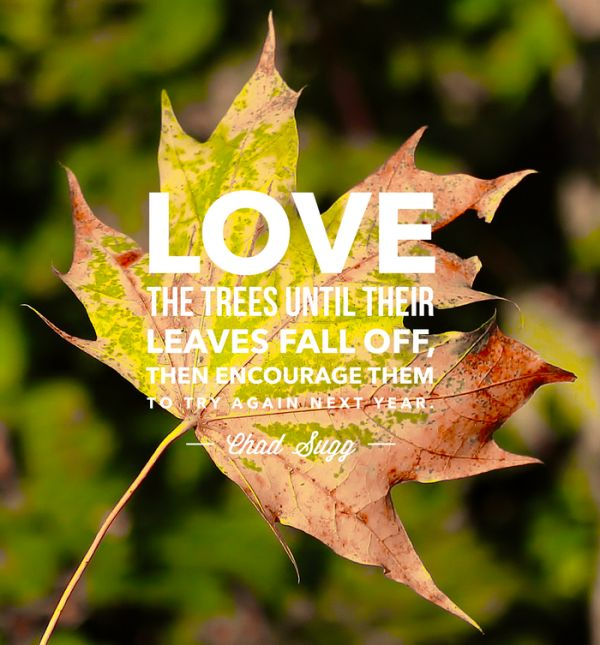 1000+ Quotes About Autumn On Pinterest
