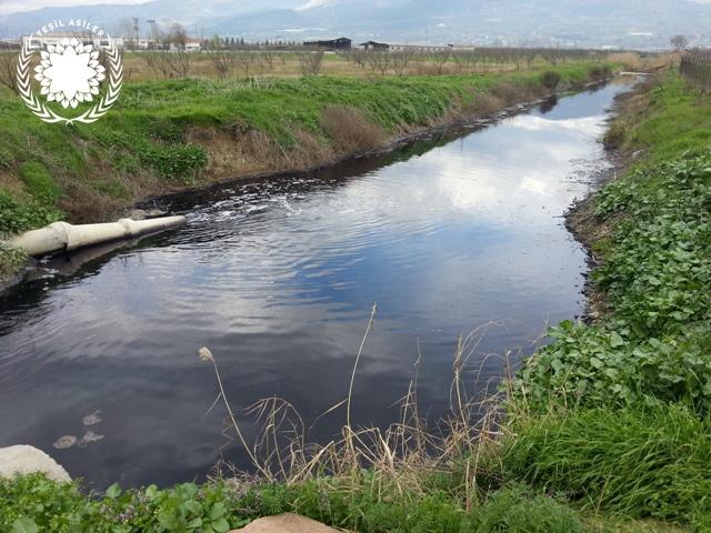 Sadırlar tekstil deşarj suyu ile meyve bahçesi suluyormuş, bu su ile sulanan meyve yenir mi?