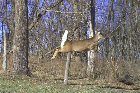 Deer Hunting 101: Scent Control in 10 Steps