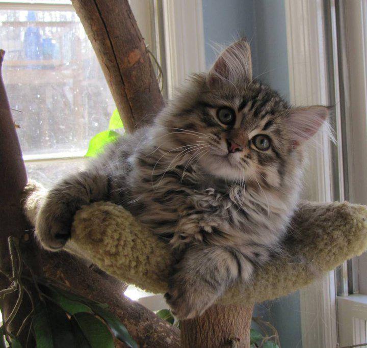 kitten gender identification