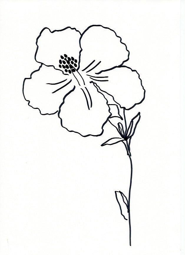 Best line drawing images on pinterest lettering