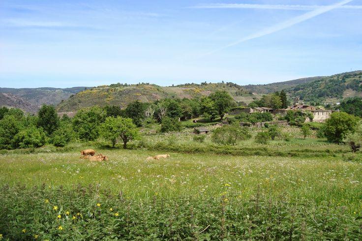 O Sorriso de Daniel. Románico Galego: Primeira Andaina polo Couto do Mosteiro de San Pai...