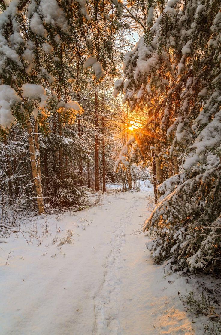 ***Last sun on a winter path (Sweden) by Geert Weggen on 500px