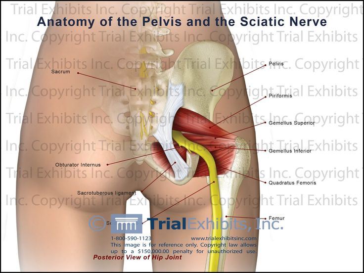 23 best sciatic nerve exercises images on pinterest | sciatic, Cephalic Vein
