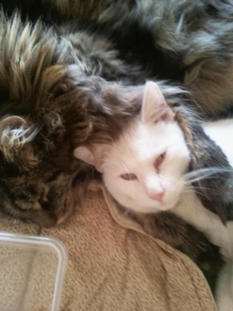 the best cat friends