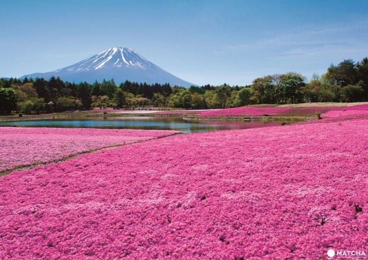 Paling Hits 30 Pemandangan Gunung Fuji Jepang Bagi Orang Yang Mengalami Hal Seperti Itu Lebih Baik Meminjam Satu Set P Di 2020 Pemandangan Wisata Jepang Gunung Fuji