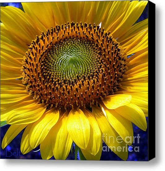 Sunflower On Three Canvas Painting | Sunflower No.22 Stretched Canvas Print / Canvas Art By Christine Belt