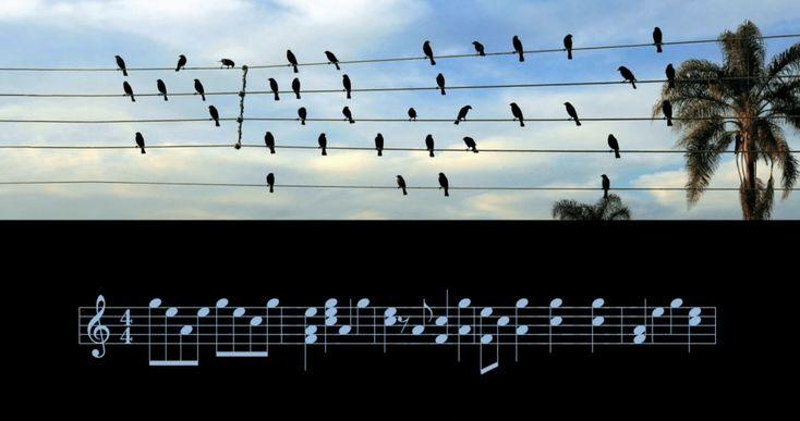Talvez você já tenha visto o famoso clique dos pássaros em fios elétricos, de Paulo Pinto. As aves foram usadas como nota musicais em uma bela canção