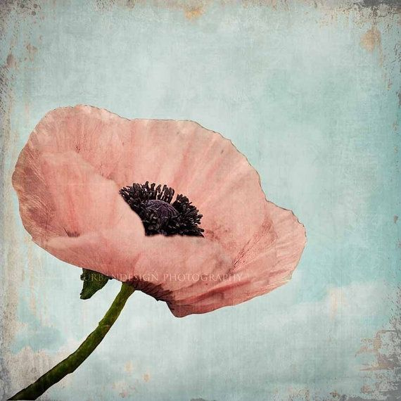 Poppy Flower Photography Pastel Pink Blue Vintage Wall