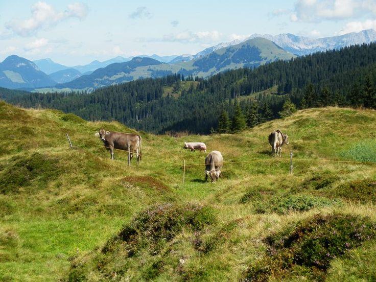 Awesome Austria/Betagende bjergvandring i alperne - Rejseblokken