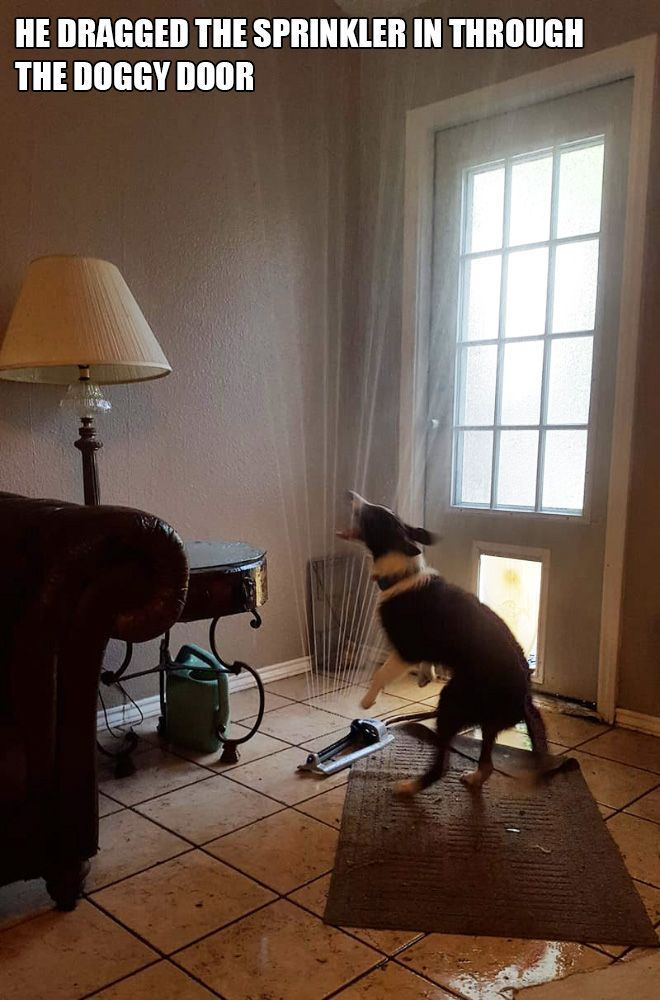 Idiot Dogs Cracking You Up – WACKY