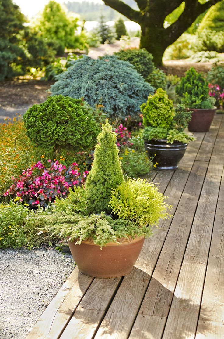 Garden Designs Ideas 2018 Cone Shaped Jeans Dilly Alberta Spruce With Its Fine Green Needles Th Container Gardening Diy Container Gardening Garden Design