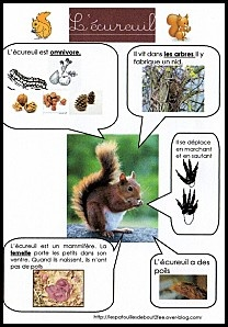 Fiches documentaires simples sur les animaux ecureuil