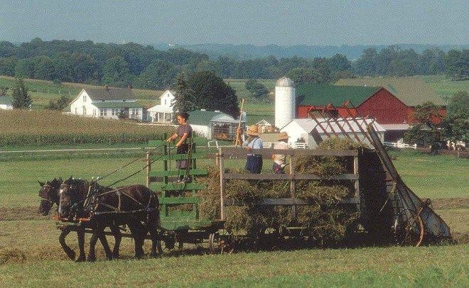 Living Off the Grid: 6 Secrets of the Amish Farmers