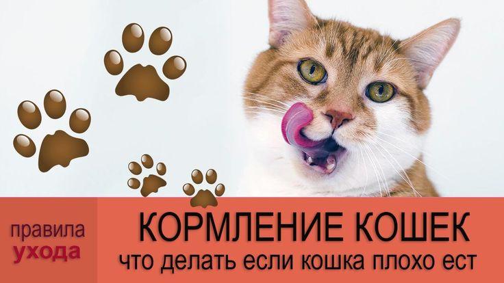 ВСЕ ПРО КОШЕК: Кормление кошек и котят.