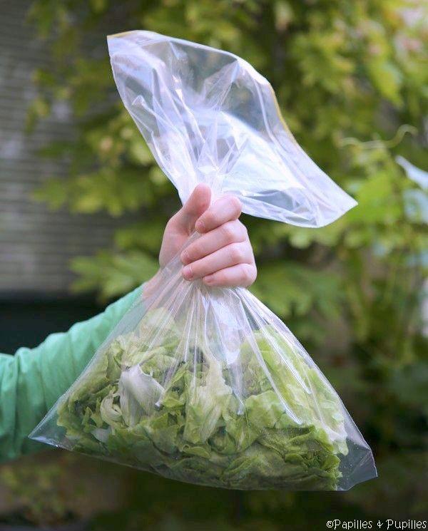 Comment conserver la salade ? Trucs et astuces | Papilles & Pupilles