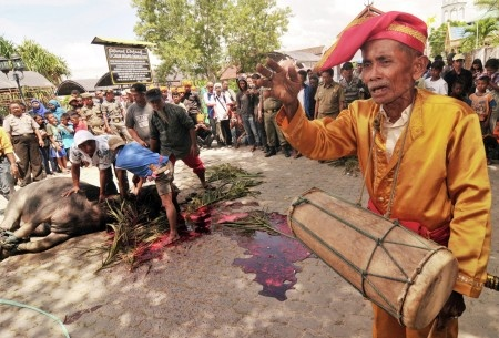 Basri: Elders beat drums to accompany the slaughter of buffalo in the traditional procession Mpokeso and Mposuna (circumcision) in Banua Oge (traditional house) in Palu, Central Sulawesi, 29 November 2012. The new traditional procession was held after 40 years was done to preserve the traditional values and culture of tribal ancestors Kaili in Palu. The procession which lasted three days and three nights that ended with the slaughter of the buffalo.