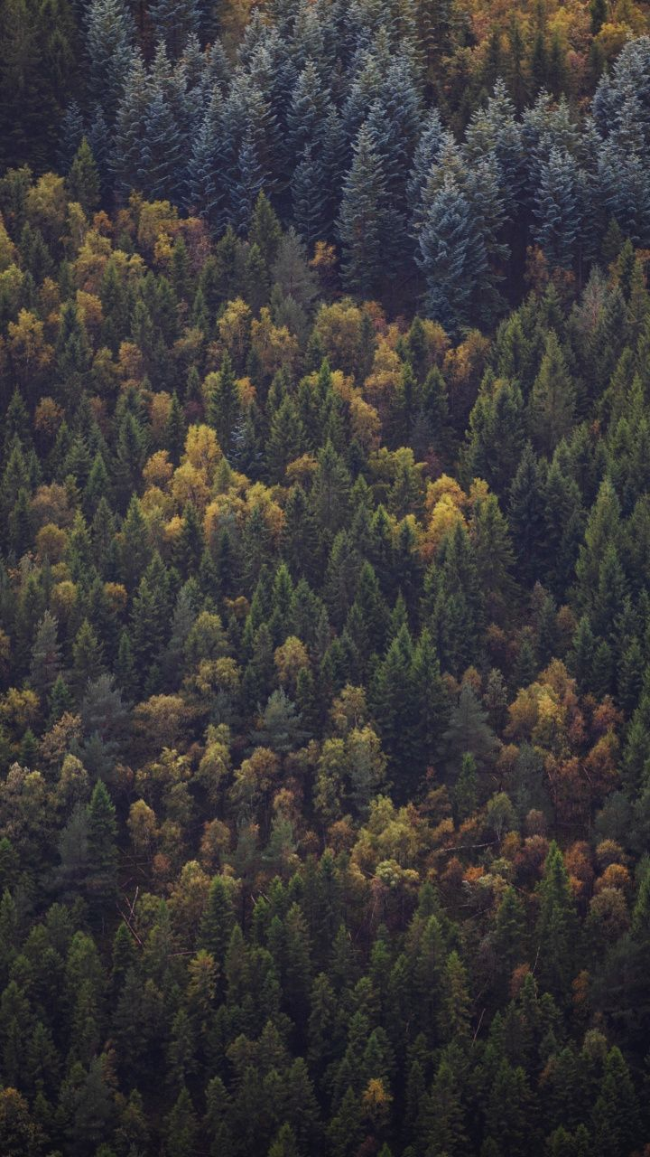 Green Trees Forest Aerial View Peaks 720x1280 Wallpaper Aerial View Green Trees Aerial Hd wallpaper forest trees aerial view