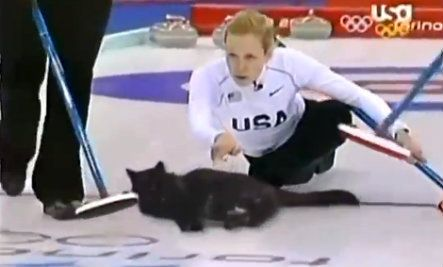 Olympic Cat Curling (Video)