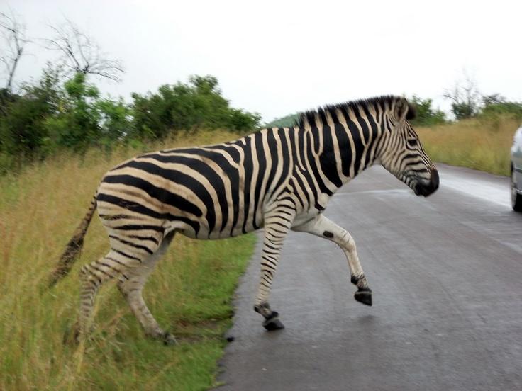 At Pilanesberg near Johannesburg