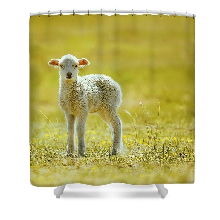 Oksana Ariskina Shower Curtain featuring the photograph Cute Lamb by Oksana Ariskina #OksanaAriskina #OksanaAriskinaFineArtPhotography #ArtForHome #FineArtPrints #InteriorDesign #PrintsForSale #Sheep #Farm #FairyTale #Lamb #Rural #Yellow #Summer #Spring #Cute #Baby #ShowerCurtain