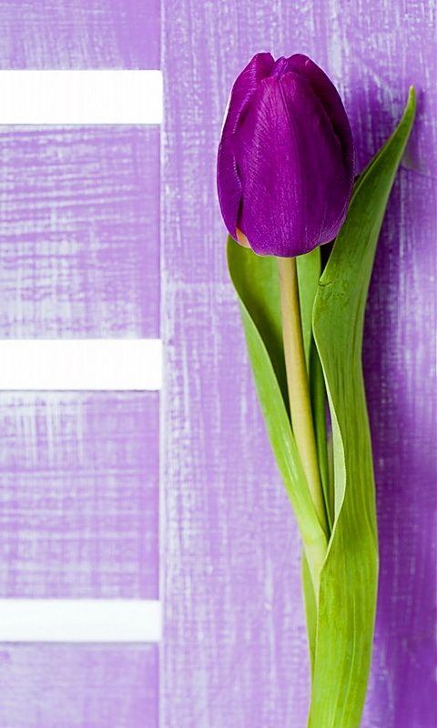 Purple flower Whatsapp background