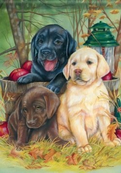 Amazon.com: Yellow Chocolate Black Lab Puppy Double Sided Labrador Garden Flag 13 x 18: Patio, Lawn & Garden