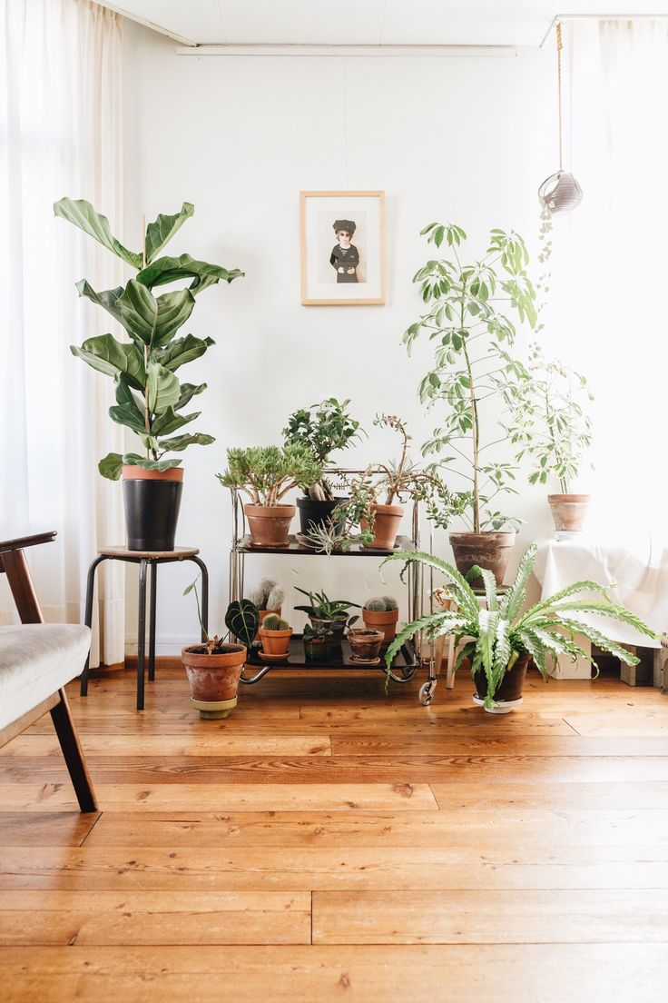 best indoor plants images on Pinterest Apartments Living room