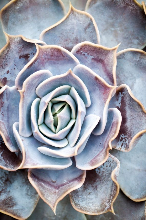 Succulent Symmetry Plant Photo Silver & by notesfromthefield, $12.00